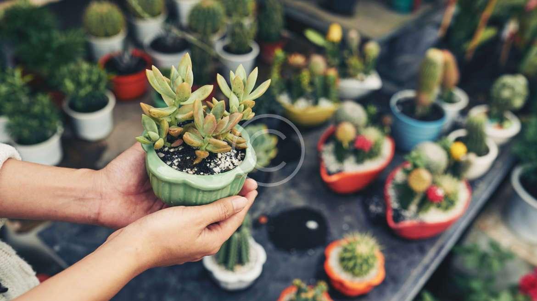 Are Your Houseplants Happy?