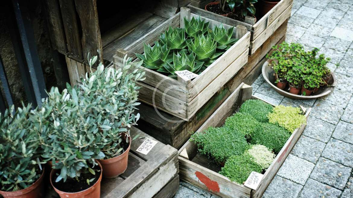 Holiday Gifts for Indoor Gardeners