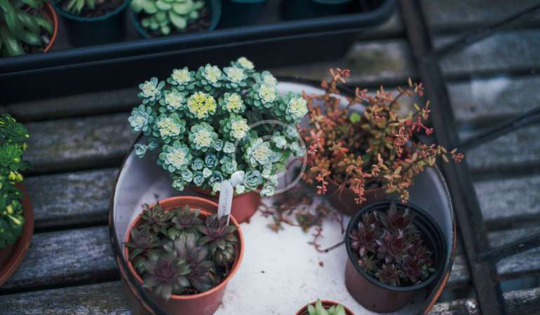 International Plant Appreciation Day