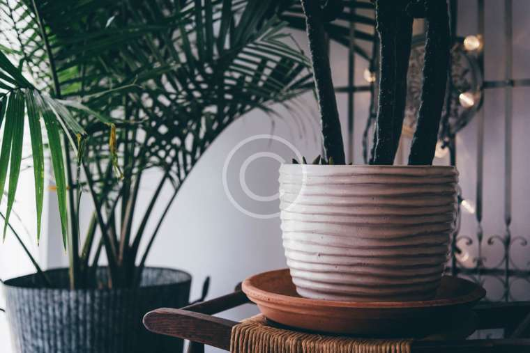 Plant Trends for 2017 by The Joy of Plants